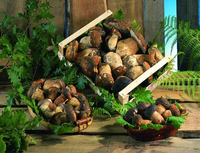funghi quercia 26
